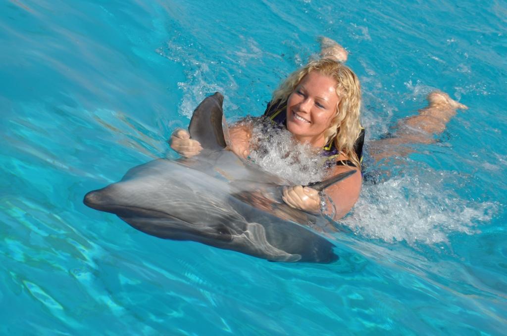 Подарки плавание с дельфинами 655